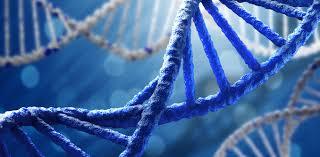 Новый этап развития генной инженерии – редактирование генов одобрено в США